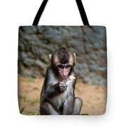 Japanese Macaque Monkey Tote Bag