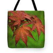 Japanese Maple Autumn Colors Tote Bag