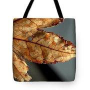 Japanese Maple Leaf Brown - 2 Tote Bag