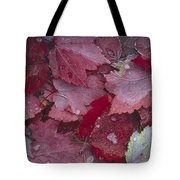 Japanese Maple Leaves With Frost Tote Bag