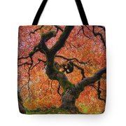 Japanese Maple Tree In Fall Tote Bag