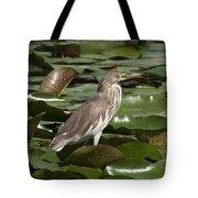 Javan Pond Heron Dthn0071 Tote Bag