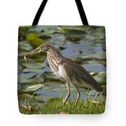 Javan Pond Heron With A Fish Dthn0069 Tote Bag