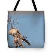 jn03 Bearded Reedling Juvenile Tote Bag