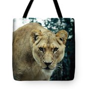 Join Me For Lunch? Tote Bag