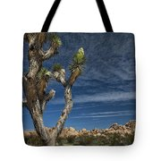Joshua Tree In Joshua Tree National Park No. 279 Tote Bag
