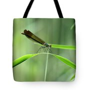 June Damselfly  Tote Bag