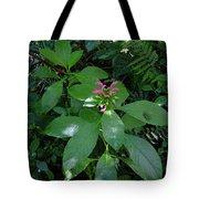 jungle in La Amistad National Park Panama 4 Tote Bag
