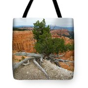 Juniper Tree Clings To The Canyon Edge Tote Bag