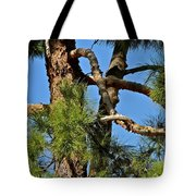 Just A Tangle Of Pine Tree Branches Tote Bag