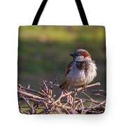 Just Made It Through The Winter - Featured 3 Tote Bag