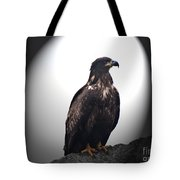 Juvenile Bald Eagle Year 1 Tote Bag