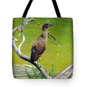 Juvenile Black-crowned Night Heron  Tote Bag