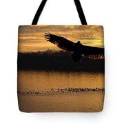 Juvenile Eagle Golden Sunset Tote Bag