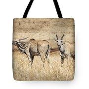 Juvenile Eland Tote Bag