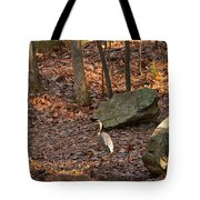 Juvenile Great Blue Heron  Tote Bag