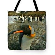 Juvenile King Penguin Tote Bag