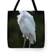 Juvenile Little Blue Heron On Sign Tote Bag