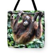Juvenile Orangutan Borneo Tote Bag