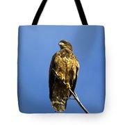 Juvenile Perch Tote Bag