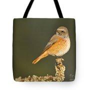 Juvenile Redstart Phoenicurus Phoenicurus Tote Bag