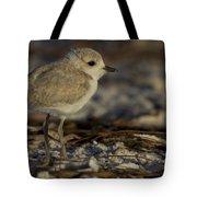Juvenile Snowy Plover Photo Tote Bag