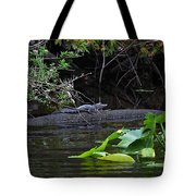 Juvie Gator Tote Bag