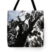 Kahikatea New Zealand Native Tree Tote Bag