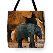 Kalahari Elephants Tote Bag