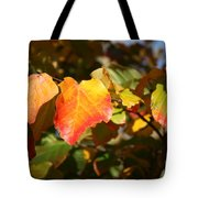 Kansas Fall Leaves Close Up Tote Bag