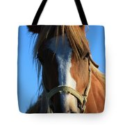 Kansas Horse Potrait Red And White Tote Bag by Robert D  Brozek