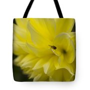 Kelvin Floodlight Dahlia Tote Bag