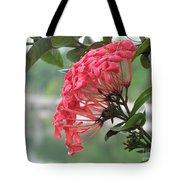 Kerala Beauty Tote Bag