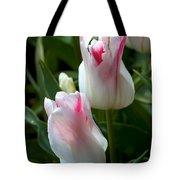 Keukenhof Tulip Buds Tote Bag
