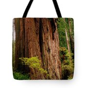 Kevin And The Big Tree - Redwood National Forest Tote Bag