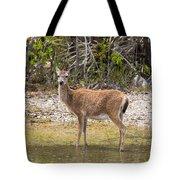 Key Deer Portrait Tote Bag
