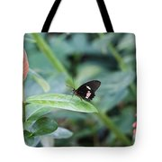 Key West Butterfly Conservatory - In Black White And Orange Tote Bag