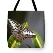 Key West Butterfly Conservatory - In Brown And White Tote Bag