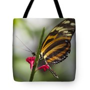 Key West Butterfly Conservatory - Papilio Zagreus Tote Bag