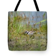 Killdeer Hatchling Tote Bag