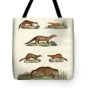 Kinds Of Otters And Marten Tote Bag