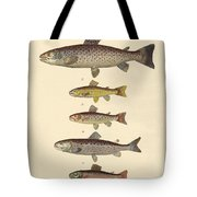 Kinds Of Trouts Tote Bag