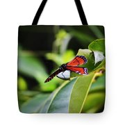 King Of The Butterflies Tote Bag