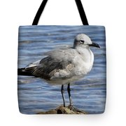 King Of The Rock Seagull Tote Bag