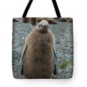 King Penguin Chick Tote Bag