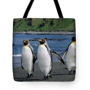 King Penguin Trio On Shoreline Tote Bag