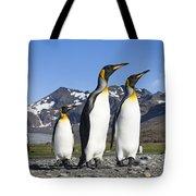 King Penguins St Andrews Bay South Tote Bag