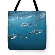 King Penguins Swimming Underwater Tote Bag
