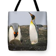 King Penguins With Chick And Egg Tote Bag