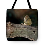 Kinglet On The Feed Tote Bag